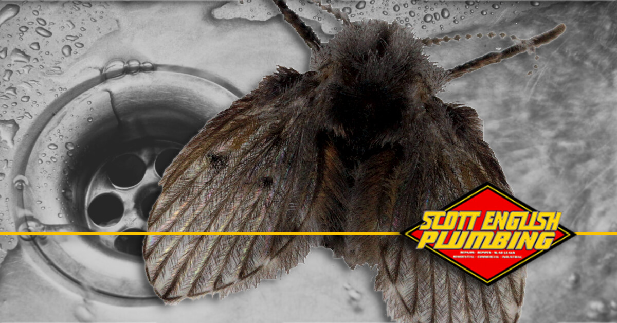 how to get rid of drain flies featured image featuring drain and drain fly