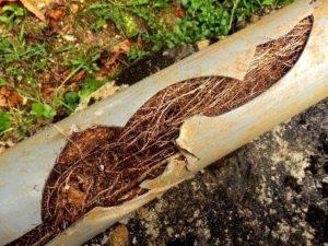 roots in plumbing in orange county